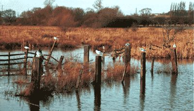 RSPB Fairburn Ings - Tourist Attractions in Yorkshire